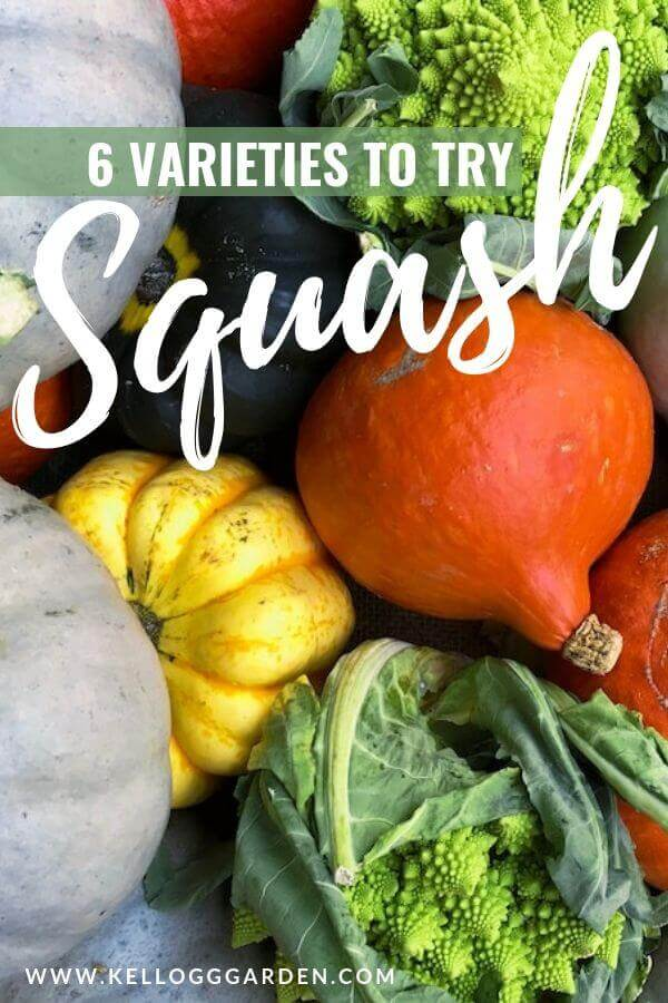 squash varieties canva