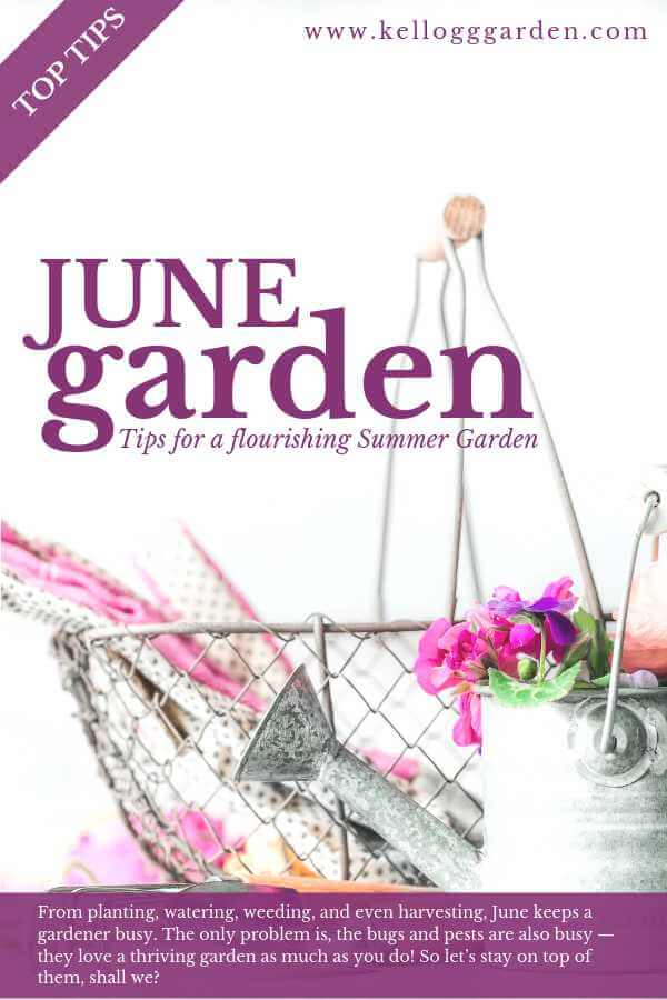 Garden images for the month of June