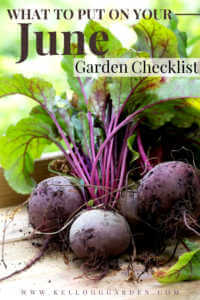 "Freshly harvested beets in a wooden container with text, ""What to put on your June garden checklist"""