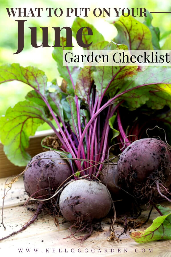 """Freshly harvested beets in a wooden container with text, """"What to put on your June garden checklist"""""""