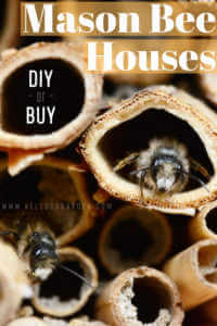 """Close up photo of a mason bee house with text, """" Mason Bee Houses, DIY or Buy"""""""