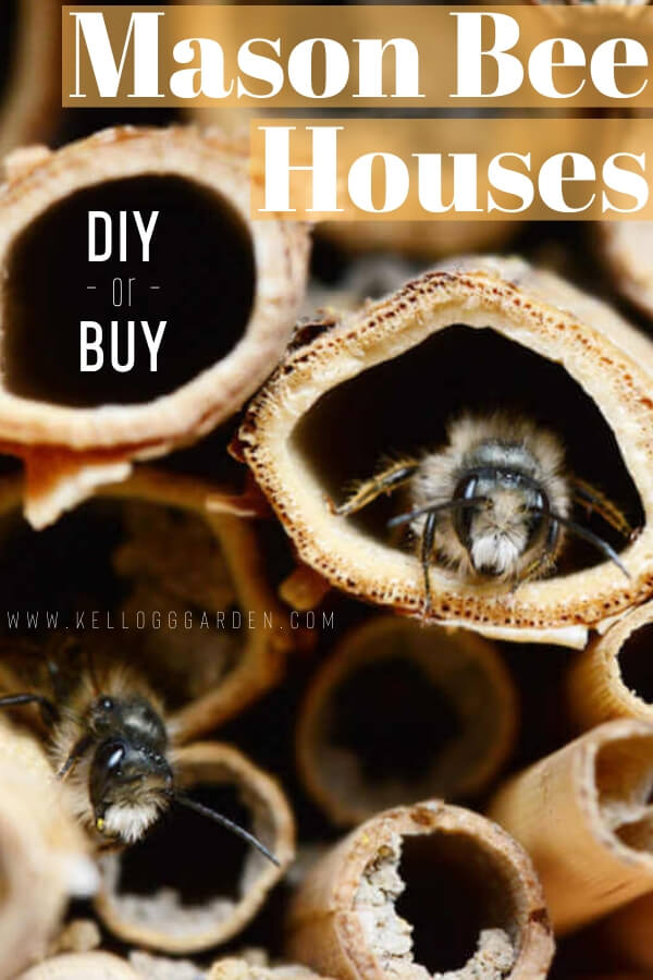 "Close up photo of a mason bee house with text, "" Mason Bee Houses, DIY or Buy"""