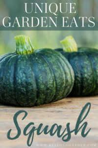 "Green squash with text, ""Unique garden eats, squash"""