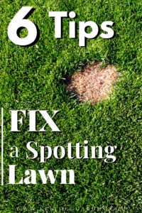 "Lawn with spot with text, ""6 tips to fix a spotting lawn"""