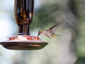 hummingbird vacuum