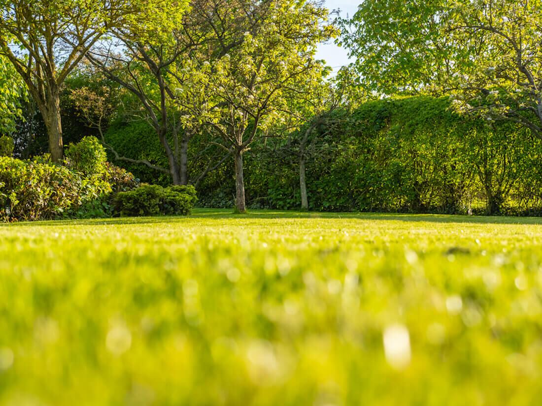 ragged grass edges
