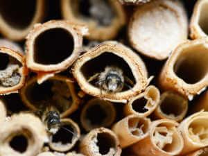 mason bee house closeup