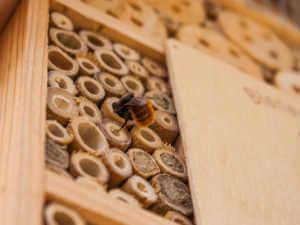 mason bee tubes