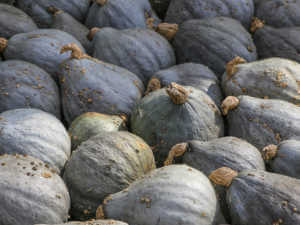Blue hubbard squashes