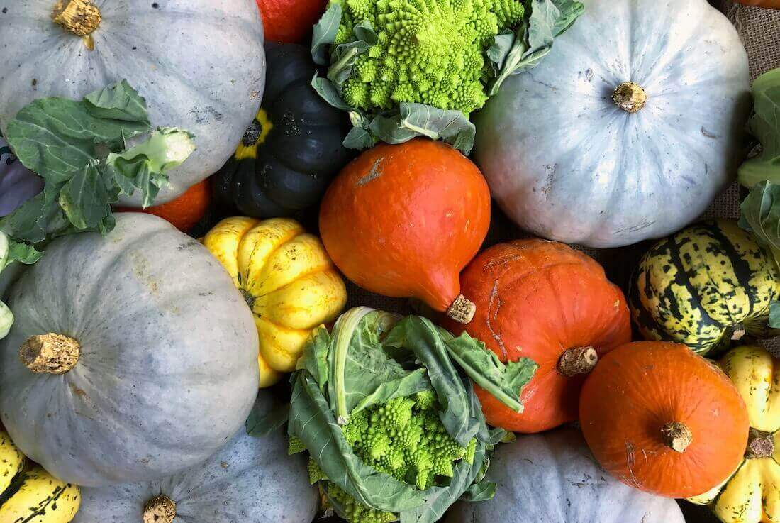 squash varieties feature
