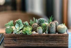 succulent design feature