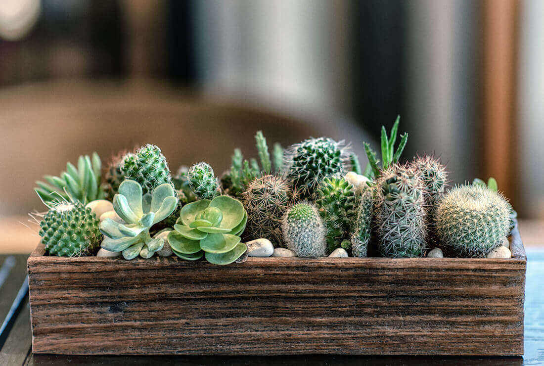 succulent design feature