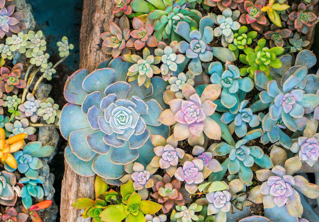succulent propagation feature
