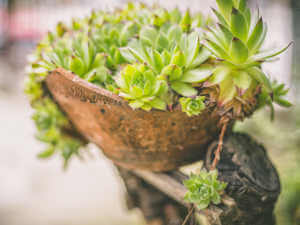 potted green succulent