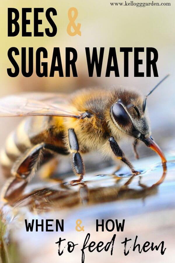 Bee Sugar water feature