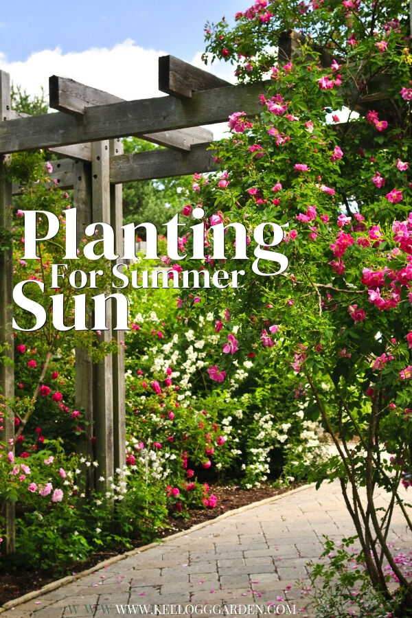 "Rose growing through an arbor with text, ""Planting for Sumer Sun"""