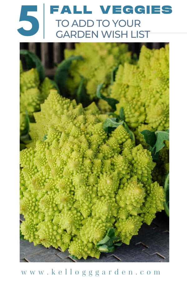 "Head of broccoli with text, ""5 Fall veggies to add to your garden wishlist"""