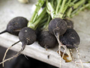 black raddishes
