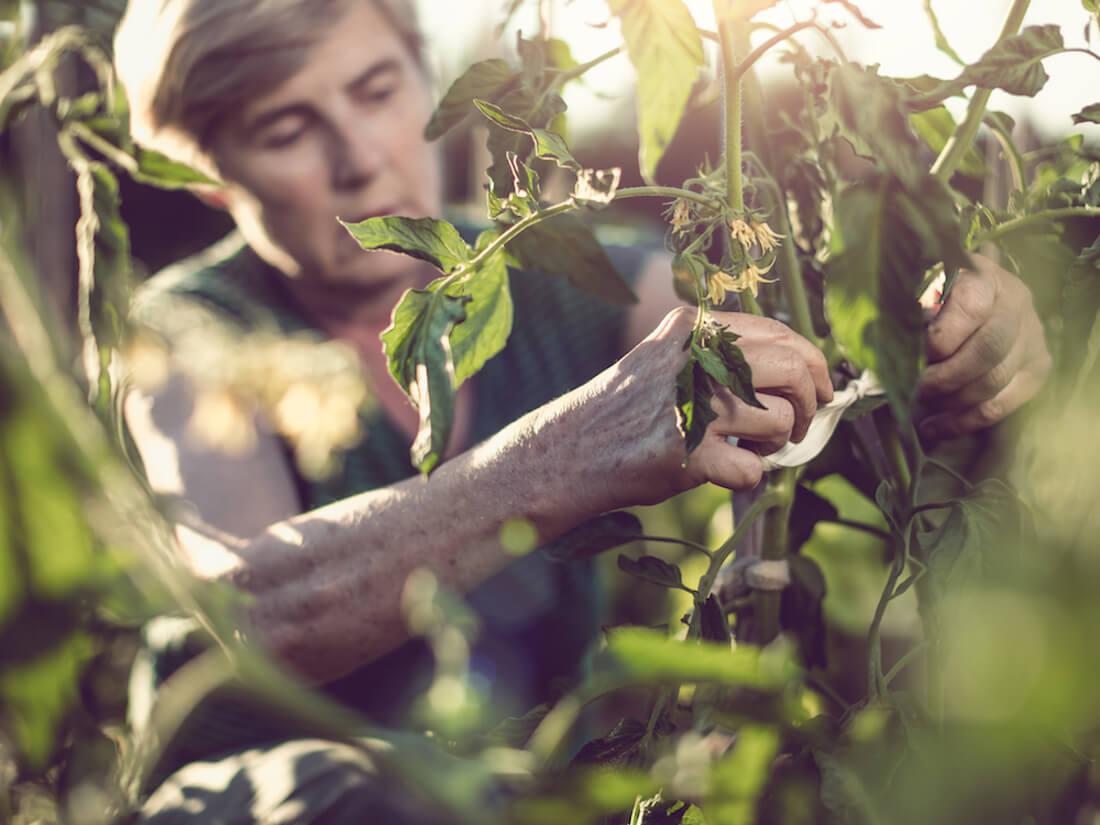 woman pruning leaves
