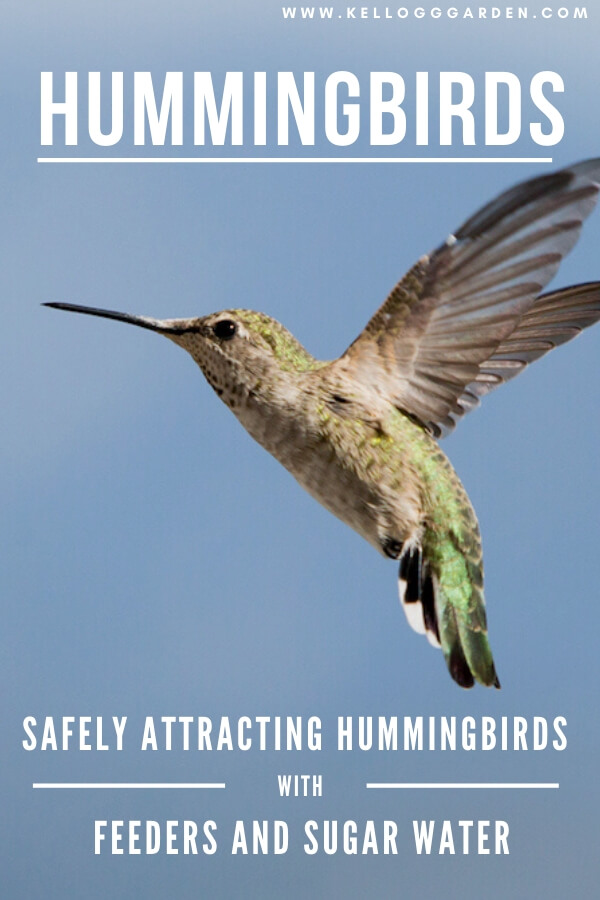 """Hummingbird flying with text, """"safely attract hummingbirds with feeders and sugar water"""""""