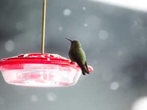 hummingbird saucer feeder