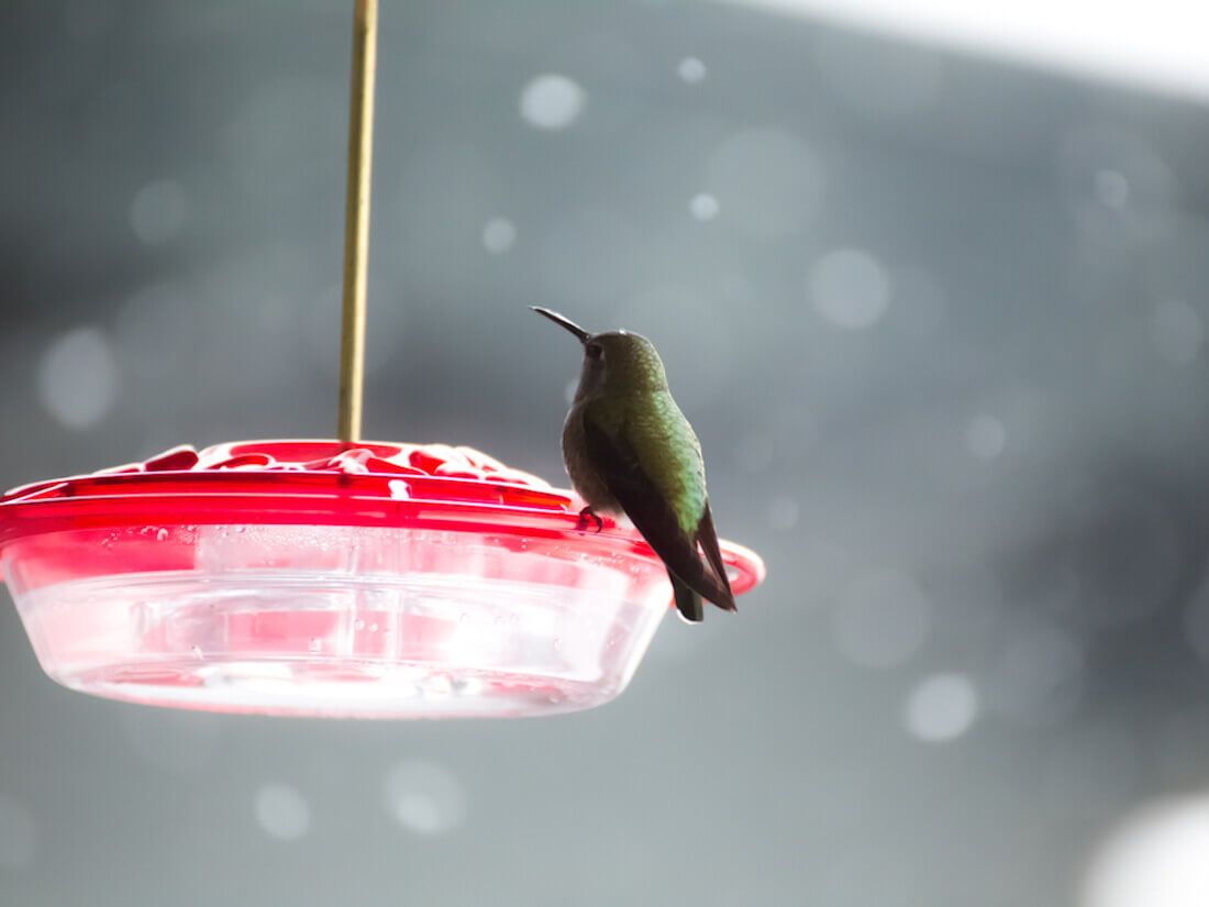 hummingbird saucer feeder