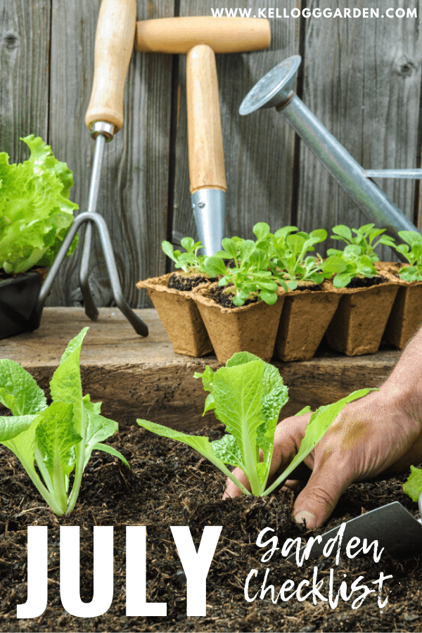 july garden checklist
