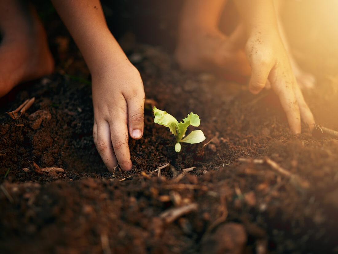 Soil plant