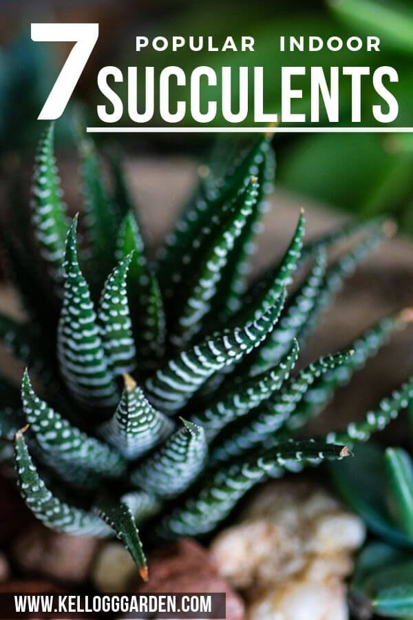 7 popular indoor succulents PI image
