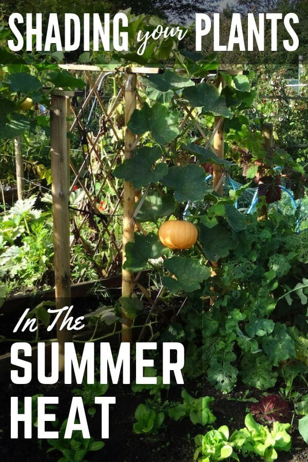 Shading your plants in the summer heat