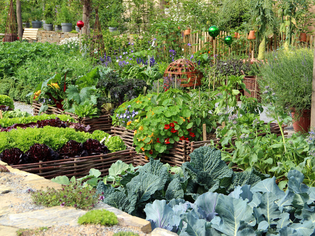 crop rotation leafy garden