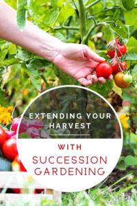 extending your harvest