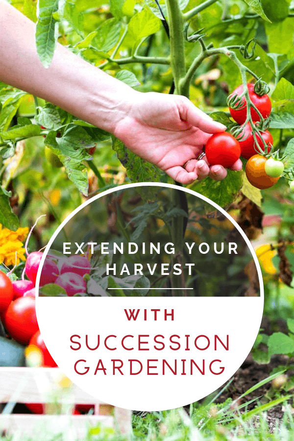 extending your harvest
