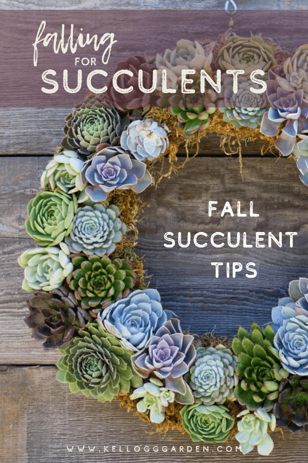 fall for succulents PI 2