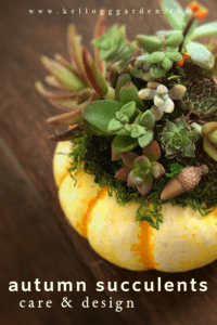 Fall for Succulents PI 1