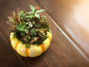 Orange pumpkin with succulents decorated on top