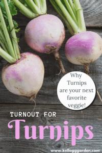Turnips PI 1