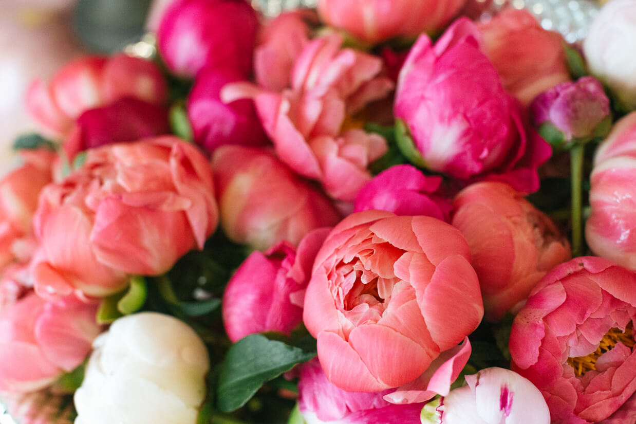 peonies featured image