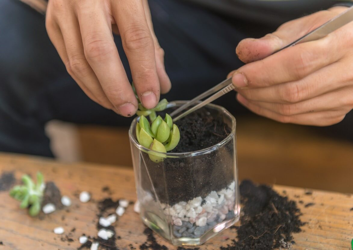Hands placing succulent in a dish with soil