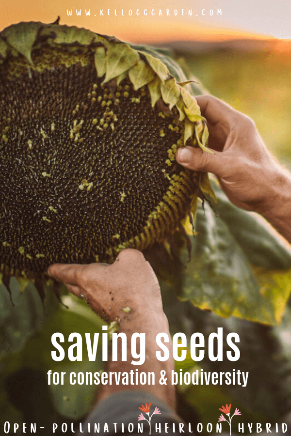Hands taking seeds out of a sunflower with text