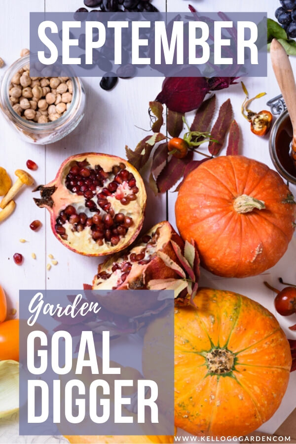 """Lay of fruit with pomegranates, pumpkins and blueberries with text, """"September garden goal digger"""""""