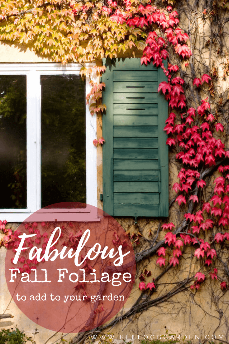 Fall leaves on a wall