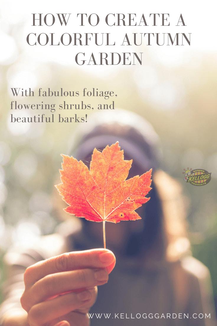 Fall-maple-leaf
