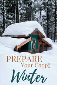 """Chicken coop covered in snow with text on image, """" Prepare your coop for winter"""""""