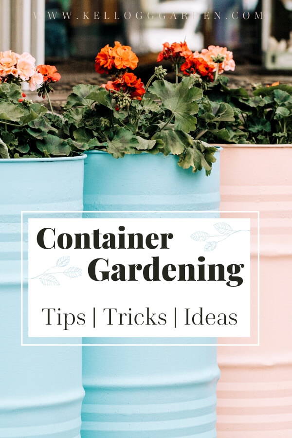 "Pastel blue and pink barrels used as container gardens with text, ""Container garden. Tips, tricks, ideas"""