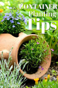 """Tipped over pot with plants growing out of it with text, """"Container planting tips"""""""