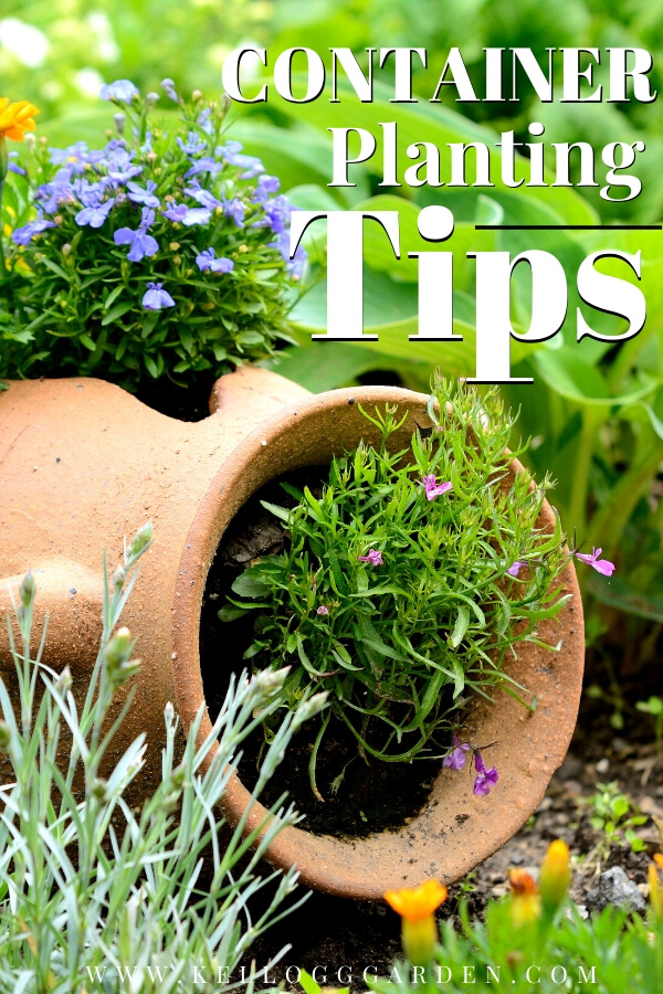 "Tipped over pot with plants growing out of it with text, ""Container planting tips"""