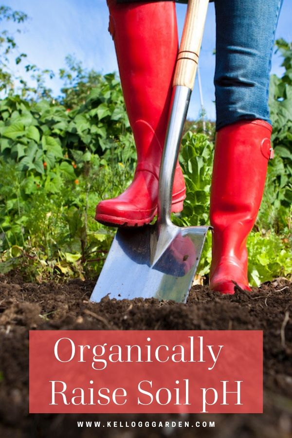 """Image of a woman with red rain boots digging into soil with text on image reading, """"Organically Raise Soil"""""""