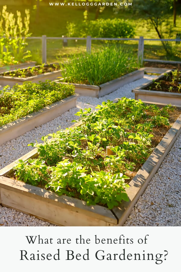 "Raised bed gardens with text, ""What are the benefits of raised bed gardening?"