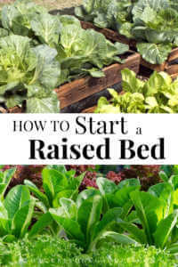 "Raised beds and lettuce growing with text, ""How to start a raised bed?"""